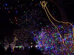 denver zoo lights hours denver zoo lights preview weekend and more 5 things to know for