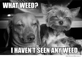 Best Weed Memes - the 25 best marijuana memes on the internet