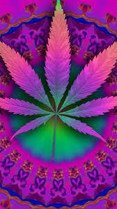 imagenes perronas mota fondos para whatsapp de mariguana imágenes wallpappers