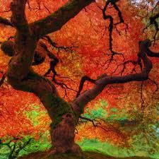 gratitude this thanksgiving season evolution management inc