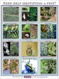 garden design garden design with list of garden pests common