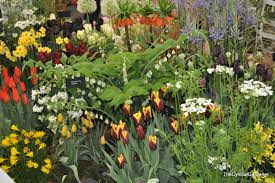 garden show in the clouds malvern 2014 the cynical gardener