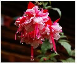 lantern flower compare prices on lantern flower online shopping buy low price