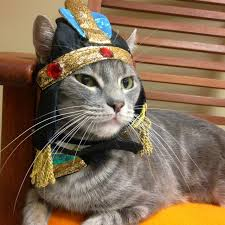 how to get into the halloween spirit humane society silicon valley blog hssv cats get into the