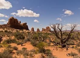 desert landscaping design ideas home design by john
