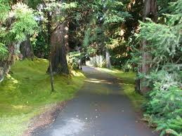 Backyard Volcano Volcano Country Cottages Hi Booking Com