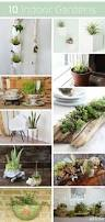 160 best plants decorating with images on pinterest indoor