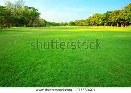 green grass yard park stock photo 563968240 shutterstock