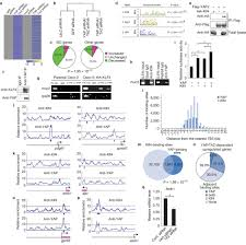 dual role of yap and taz in renewal of the intestinal epithelium