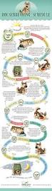 industry professionals render their very top advice on best way to stop biting nails 97 best pet infographics images on pinterest animals pet health