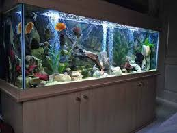tutorial how to install aquarium fish tank aquarium decorations