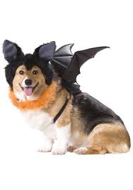 Halloween Costumes For Dogs Pet Bat Costume