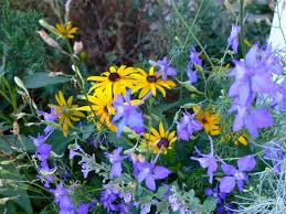 shade native plants native plants eco landscaping
