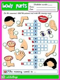 body parts worksheet english for kids pinterest body parts