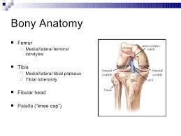 Knee Bony Anatomy Kin 188 Knee Injuries And Evaluation