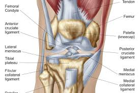 Knees Anatomy What Is Causing Your Knee Pain
