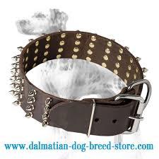 Comfortable Dog Collar Top Paw Style U0027 Dalmatian Dog Collar Dalmatian Online Store