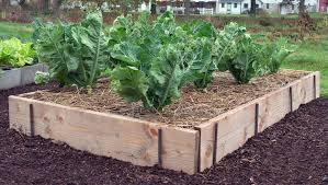 chic raised vegetable garden boxes raised vegetable garden bed