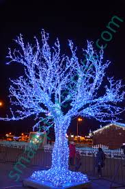 lights on a tree smart photo stock