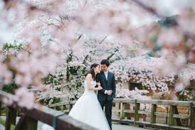 cherry blossom wedding cherry blossom pre wedding japan by synchronal photography