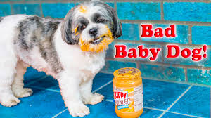 Terrible Baby Names by Bad Baby Dog Assistant And Wiggles The Bad Dog Funny Kids Video