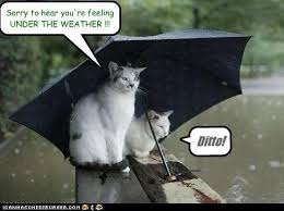 Funny Weather Memes - sorry to hear you re feeling under the weather cheezburger