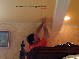 kitchen cabinets az kitchen cabinets termites eating kitchen cabinets drywood