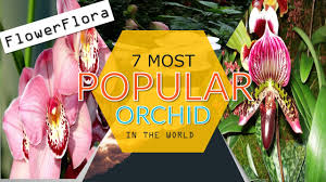 7 most popular orchid species popular house orchids which one do