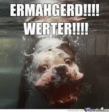 Ermahgerd Animal Memes - ermahgerd by toriblue12052010 meme center