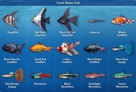 types of freshwater aquarium fish fish tank