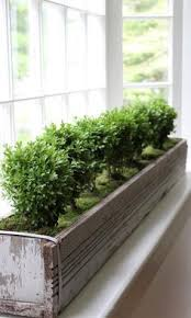 Winter Indoor Garden - best 25 indoor window boxes ideas on pinterest indoor window