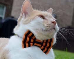 Kitten Halloween Costume Halloween Cat Collar Halloween Cat Bow Tie Halloween Costume