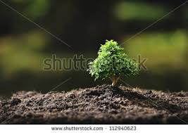 small tree stock images royalty free images vectors