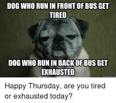 Tired Dog Meme - dog who run in frontof bus get tired dog who run in back of bus get