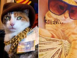 Rich Cat Meme - rich gangster cats album on imgur
