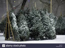 Christmas Trees New York Christmas Trees For Sale In New York City Stock Photo 2319476 Alamy