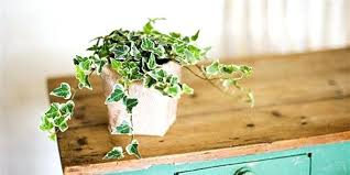 floor plants home decor plants for the home let anyone fool you growing indoor plants is