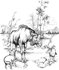 free moose coloring pages