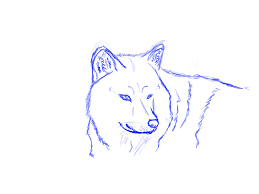 just a simple wolf sketch by lollipop3107 on deviantart