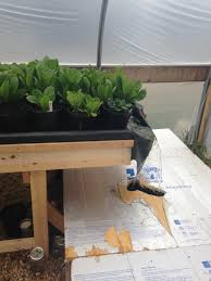 a cultural benefit to using soil as a growing medium in aquaponics