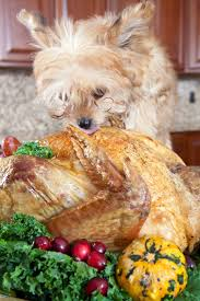 thanksgiving dog what to feed and not to feed your pet on thanksgiving