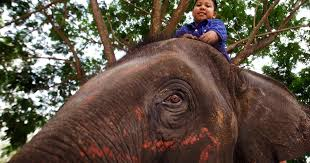 Blind Men And The Elephant Story For Children Elephants Help Autistic Children In Thailand Pictures Cbs News