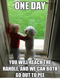 Cute Dog Memes - laugh alert 2016 s top dog memes that were total favs