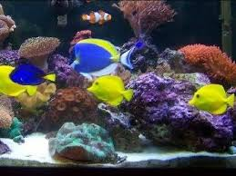 p p tropical fish beautiful salt water fish tank marine aquarium
