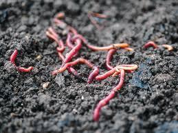 preparing soil for a garden diy