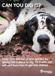 Can You Bury Animals In Your Backyard 25 Best Summer Dog Ideas Images On Pinterest Summer Dog Your