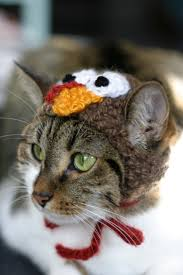 funny animal thanksgiving pictures where attention goes focus goes