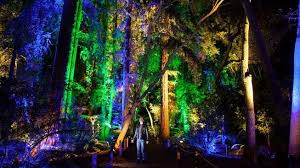 enchanted forest of light tickets enchanted forest of light pre sale begins nbc southern california
