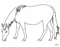 grazing american quarter horse coloring page free printable
