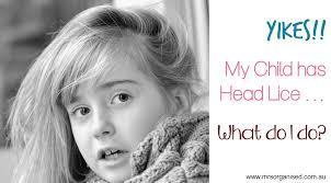 yikes my child has head lice u2026 what do i do